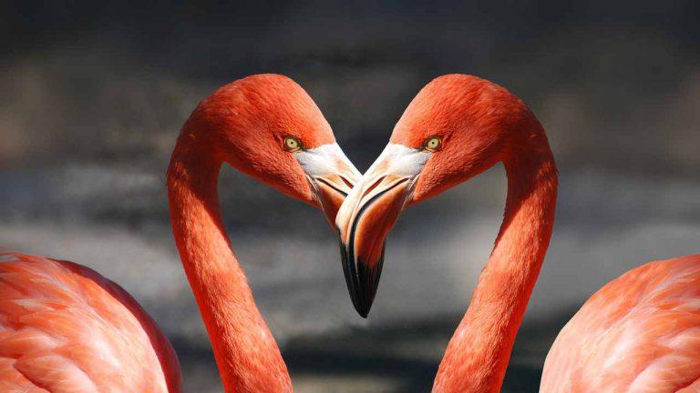 عشق دو پرنده